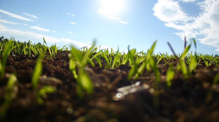 Jak wybrać skutecznie działające preparaty do zwalczania chorób roślin?