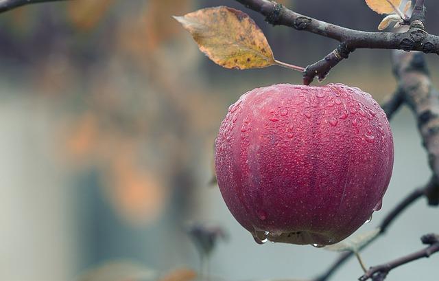 Czy zdajecie sobie sprawę z tego jak wiele rzeczy można zrobić z jabłek?